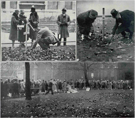 Westminster Abbey's first 'Field of Remembrance'. The Sphere, 17 November 1928. Image © Illustrated London News Group.